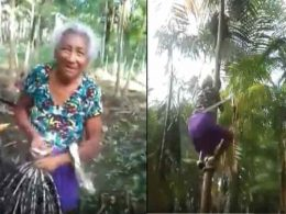 Incredible: Moment Where Granny Climbs A Very Big Palm Tree (Video)