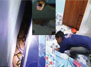 snake-under-childs-bed-viralgossitalk